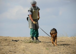 Turkey presents 10 mine detection dogs to Azerbaijan