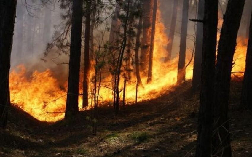 Daha bir meşənin yanma təhlükəsi yaranıb