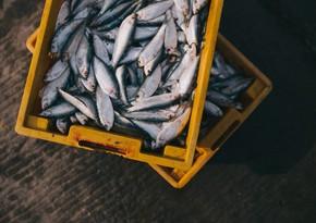 Neftçalada 3 milyon manat kapitalla balıqçılıq müəssisəsi yaradılıb