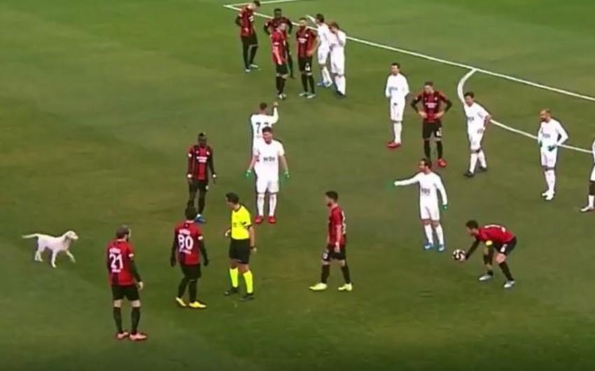 Türkiyə çempionatında it meydana girərək oyunu dayandırdı - VİDEO