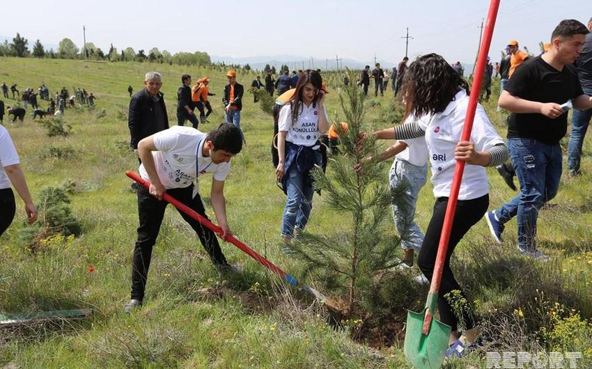 Bu gün Gəncədə 10 mindən çox ağac əkilib - FOTO