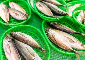 Rusiyanın daha 11 balıqçılıq müəssisəsi Azərbaycan bazarına daxil olur