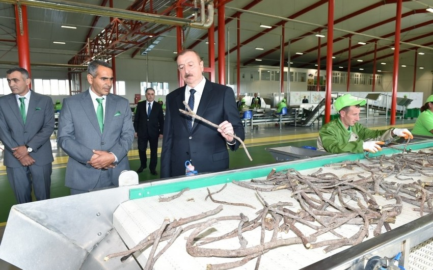 President Ilham Aliyev inaugurated Liquorice Industry Park in Aghdash