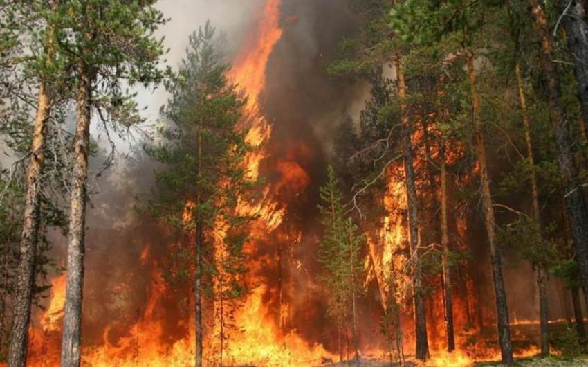 В Сирии и Ливане из-за жары вспыхнули сильные лесные пожары