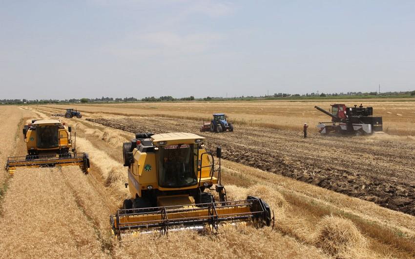 Bu il Azərbaycanda 1,6 mln. tondan artıq taxıl istehsal olunub