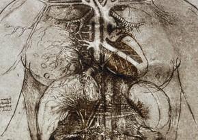 Ученые разгадали загадку Леонардо да Винчи о работе сердца
