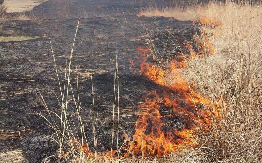 Neftçala rayonunda baş verən yanğın Şirvan Milli Parkının ərazisinə keçib