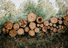 Qanunsuz yolla əldə edilmiş meşə materialı aşkarlanıb