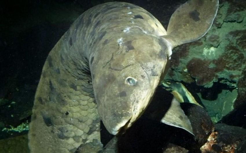 ABŞ-da dünyanın ən qoca akvarium balığı ölüb