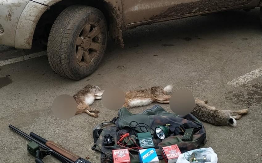Cəlilabadda dovşan ovlayan Sumqayıt sakinləri saxlanıldı