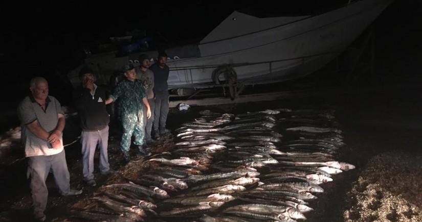 Задержаны браконьеры, выловившие 620 кг осетровых в Каспийском море
