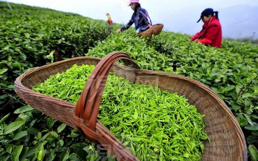 Azərbaycanın çay idxalı ixracını 10 dəfədən çox üstələyib