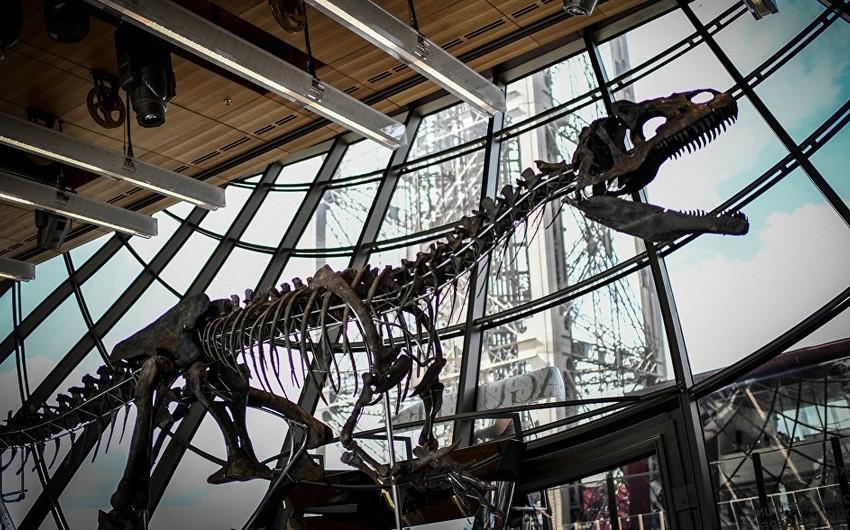 Fransa vətəndaşı nadir dinozavrın skeletini 2 milyon avroya alıb