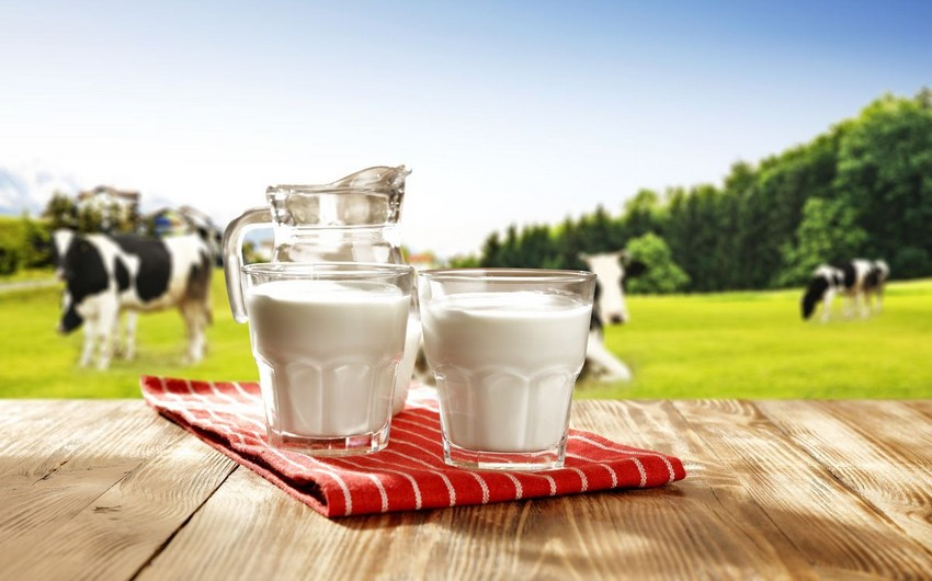 Azerbaijan elaborating state program on development of dairying