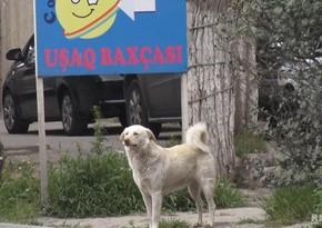 Жители Баку обеспокоены нападением бездомных собак - ВИДЕОРЕПОРТАЖ