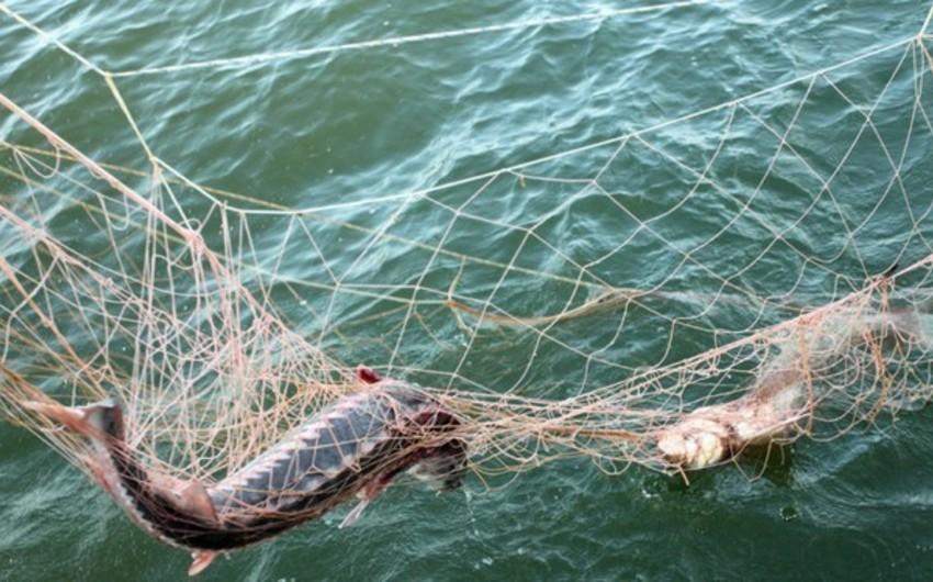Проведен рейд против браконьеров, 12 человек задержаны