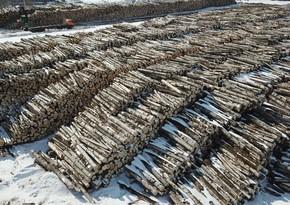 Владимирская область РФ поставила в Азербайджан и другие страны свыше 50 тыс. единиц древесины