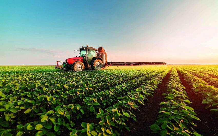 В Азербайджане формируется отвечающий современным требованиям агросектор - МНЕНИЕ