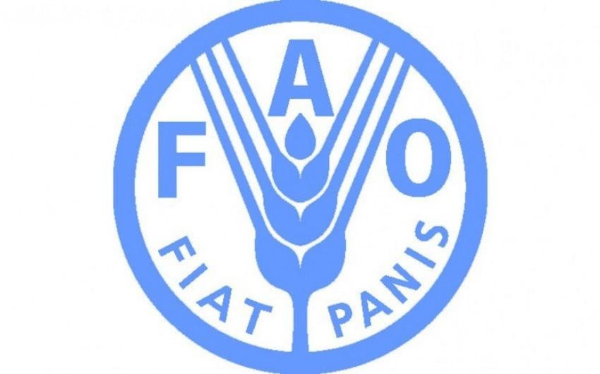 FAO: Ərzaq ucuzlaşmaqda davam edir