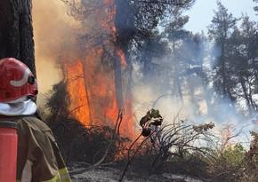 Yunanıstan polisi meşə yanğınlarına görə 118 nəfəri saxlayıb