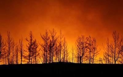 Türkiyənin Bodrum şəhərində meşə yanğını söndürülüb
