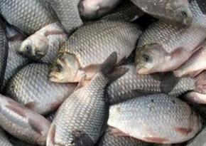 Предотвращен ввоз просроченной рыбы из России в Азербайджан
