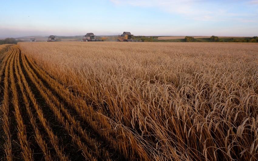 Россия повышает пошлины на экспорт зерна