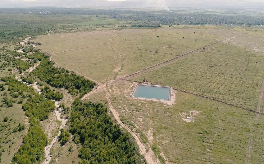 Şəki və Qaxın yararsız ərazilərində fındıq bağları salınır, əhali işlə təmin edilir - FOTO - VİDEO