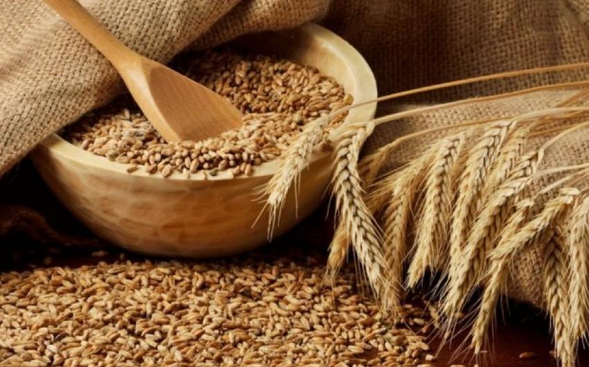 США повысили прогноз по импорту зерна Азербайджаном