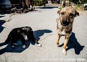 Donations made for stray animals: 'Care Box' project