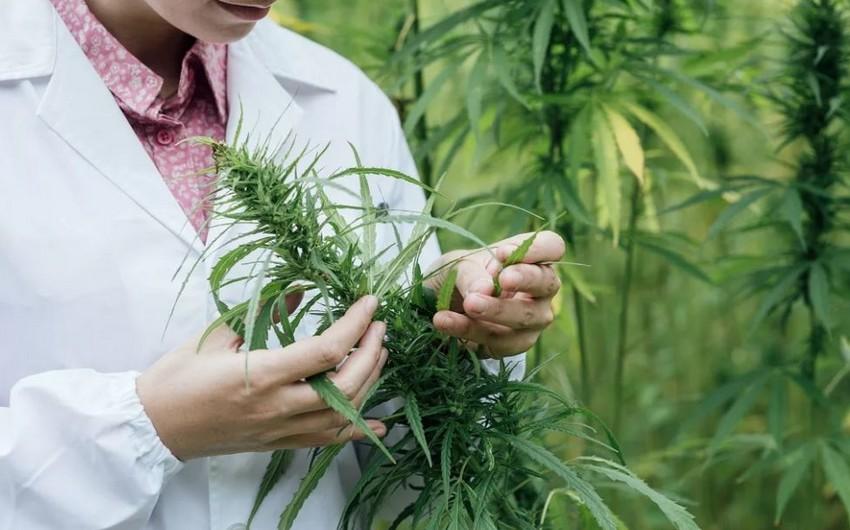 В Австралии легализовали марихуану