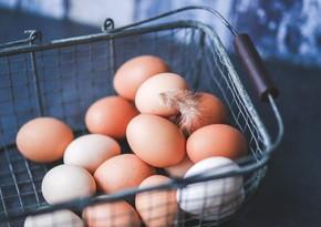 Yumurta qabığı əsasında diş plombları üçün yapışqan yaradılıb