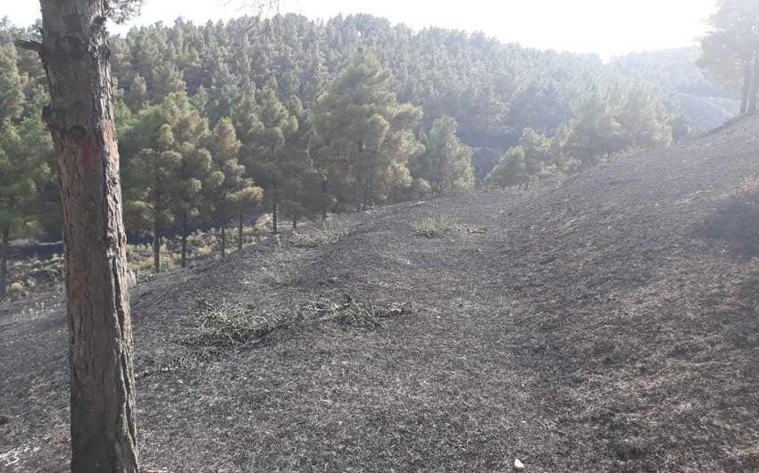 Şabranda meşə zolağında baş vermiş yanğın söndürülüb - YENİLƏNİB - FOTO