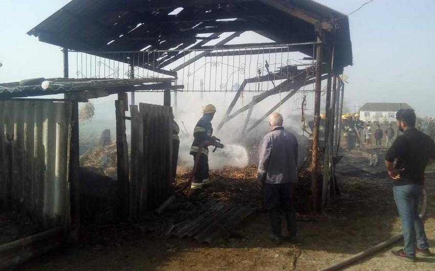 Cəlilabadda 400 ot bağlaması yandı