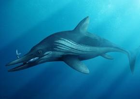 В России нашли останки ихтиозавра