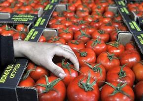 Daha 30 sahibkarın Rusiyaya pomidor ixracına icazə verildi