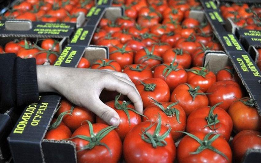 Предприятиям Азербайджана разрешено поставлять помидоры в Россию