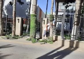 Sumqayıtda ağacların gövdəsi süni örtükdən təmizlənib