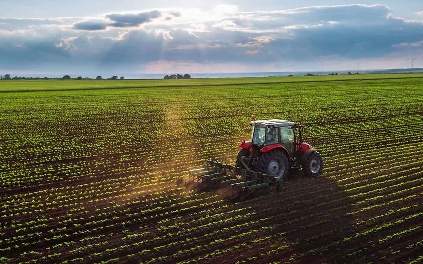 USAID: Azərbaycan fermerinə verdiyimiz hər 1 dollar 7 dollar gəlir gətirir