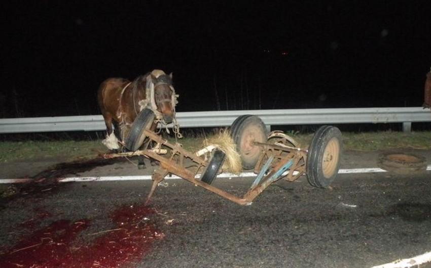 Sabirabadda avtomobil at arabasını vurub, 3 nəfər yaralanıb - YENİLƏNİB