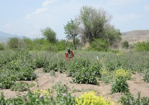 Zəngilanın Ağalı kəndlərində 76 hektar ərazi minalardan təmizlənib