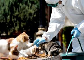 Ветеринар рассказала о проявлении коронавируса у домашних животных