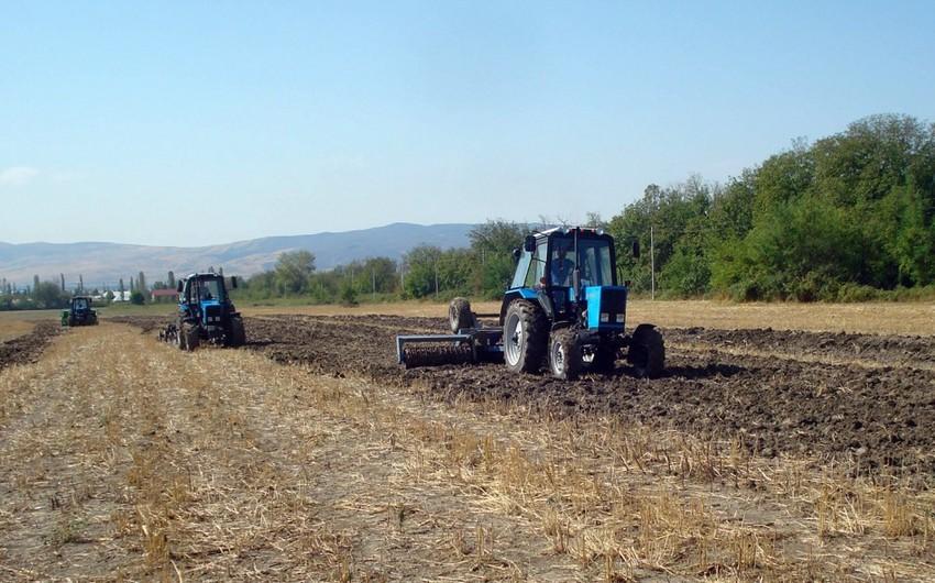 Gürcüstanda azərbaycanlıların yaşadığı bölgələrdə torpaq sahələri satışa çıxarılıb