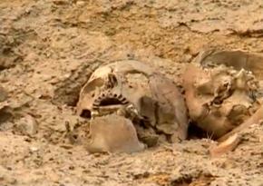 В Баку нашли человеческие кости