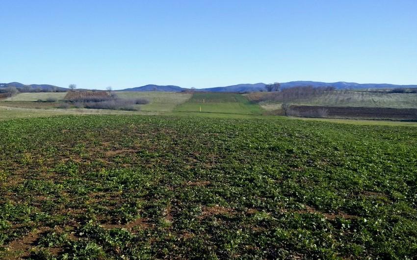 TAP-ın Albaniya və Yunanıstan hissəsində 68% torpaq bərpa edilib