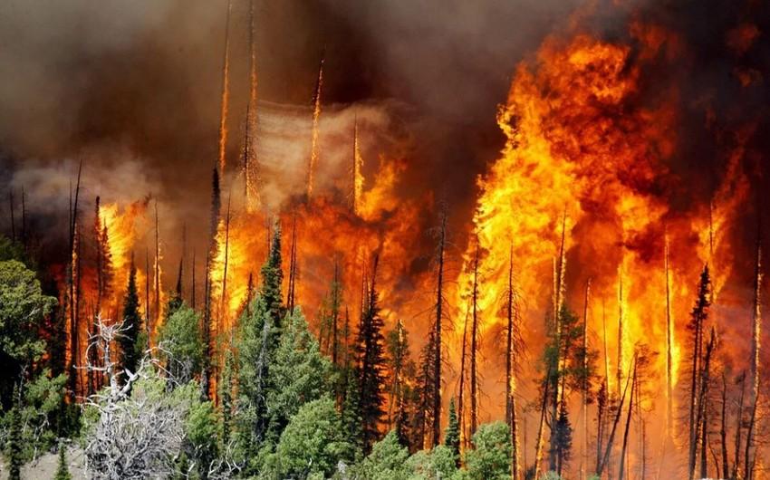 Kaliforniyada meşə yanğını qurbanlarının sayı 11 nəfərə çatdı