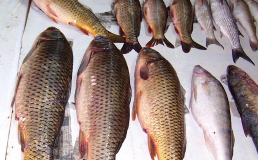 Sumqayıtda yararsız balıqlar satışdan çıxarılıb