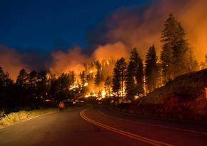Kaliforniyada meşə yanğınları tüğyan edir