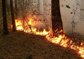 Dashkasan shelling: Fire breaks out in forest