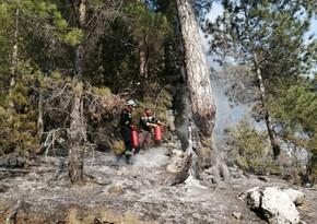 Названы регионы Турции, где силы МЧС Азербайджана участвовали в тушении пожаров